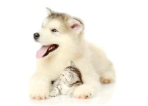 FosterFurkids.com Foster pets, Foster Fur Kids